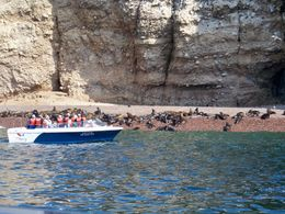 Approaching a colony of sea lions at Ballesta Islands just far enough to take good photos, Tim Leffel - August 2011