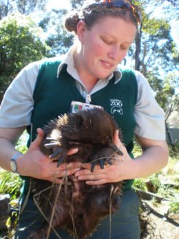 Inside the Echidna enclosure - March 2008
