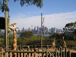 Taronga Zoo: This is why they say the giraffes have the best view of Sydney., Christine C - July 2008