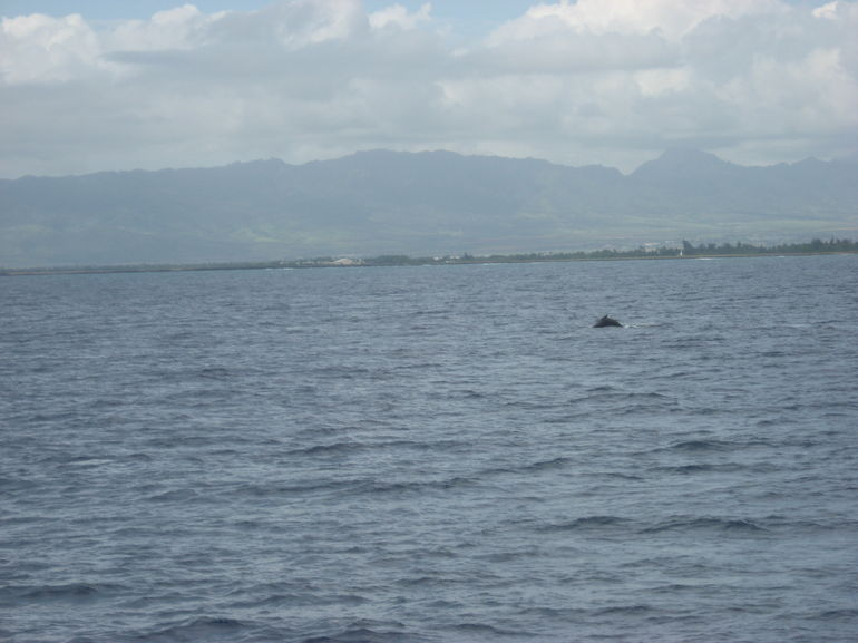 Whale - Oahu