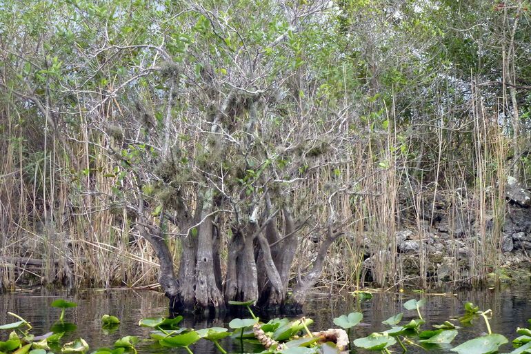 Beautiful Everglades - Fort Lauderdale