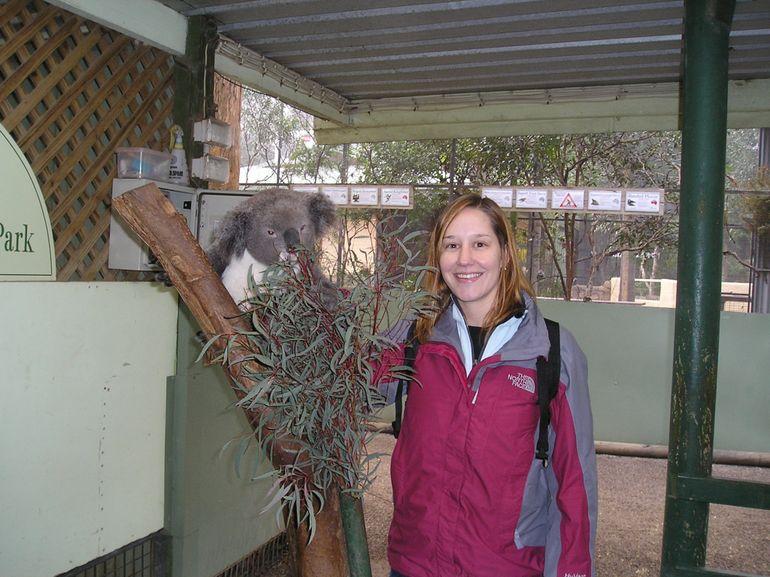 Blue Mountains Day Trip - Koala - Sydney