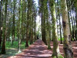 Forest , Nikki - August 2012