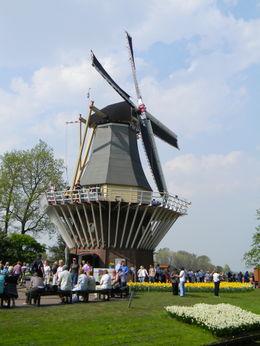 Windmill at the Keukenhof Gardens , Della T - July 2011