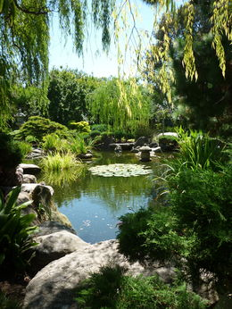 A visit to the small but beautiful Adelaide-Himeji Garden is included in the Adelaide Sightseeing tour. Simply lovely. , Deanne - February 2015