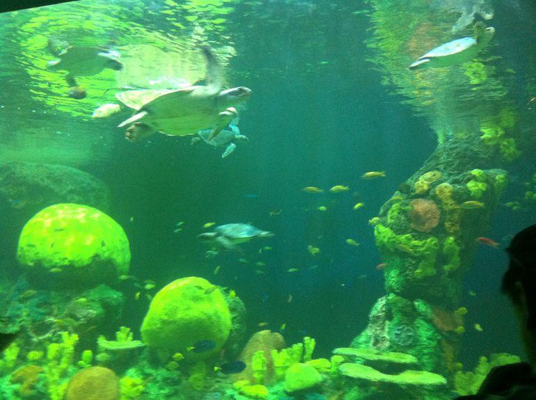 Turtle Reef - San Diego