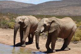 Elephants at the watering hole , Lorna F - January 2017