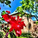 Private Sonoma and Napa Wine Tour from San Francisco, ,