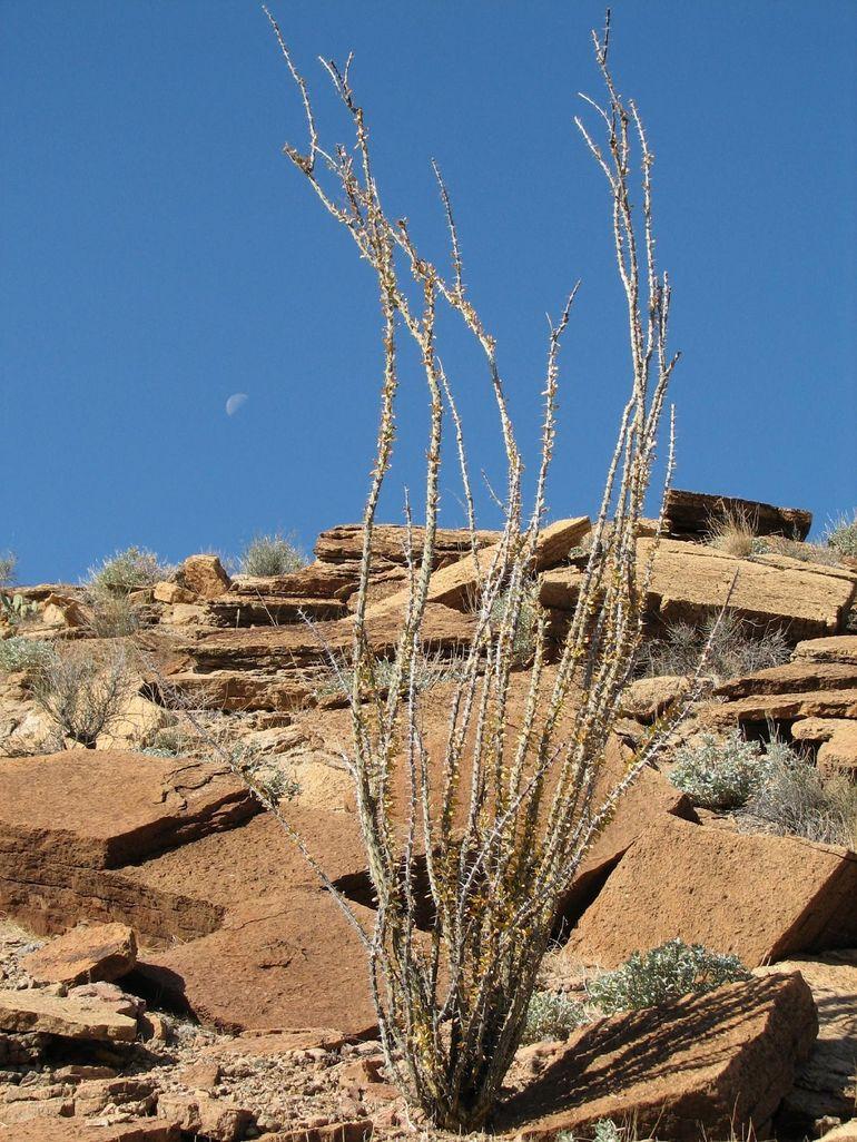 Desert cactus and moon - Las Vegas