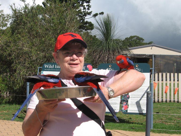 Feeding the Birds - Gold Coast