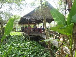 Beautiful setting among mangroves - December 2011