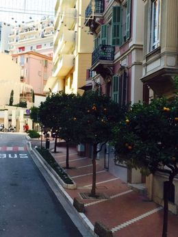 Monaco ... Old town , Bev Chislett - January 2016
