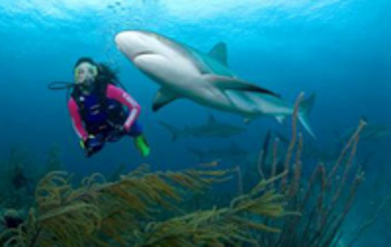 Swimming with shark - Nassau