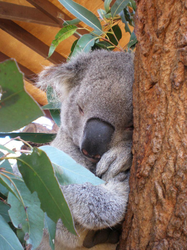 Sydney Taronga Zoo - Sydney