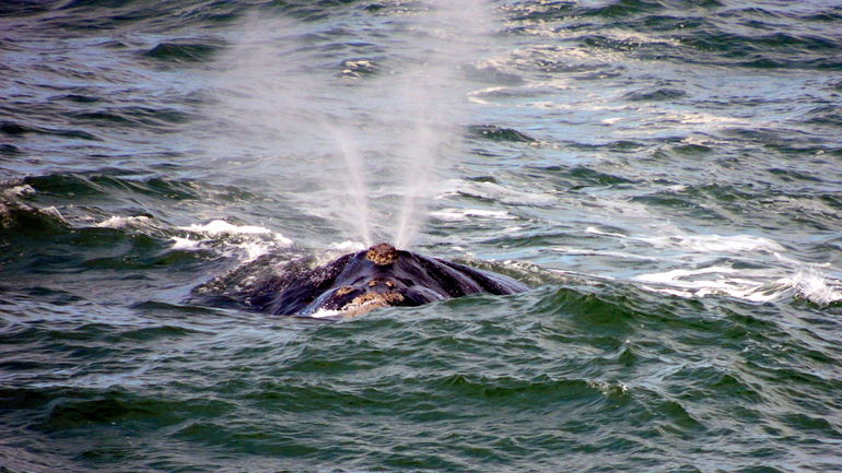 Whale Watching Day Trip from Cape Town