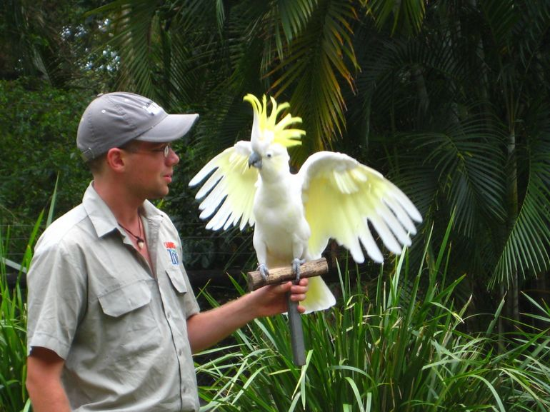 Bird show - Cairns & the Tropical North