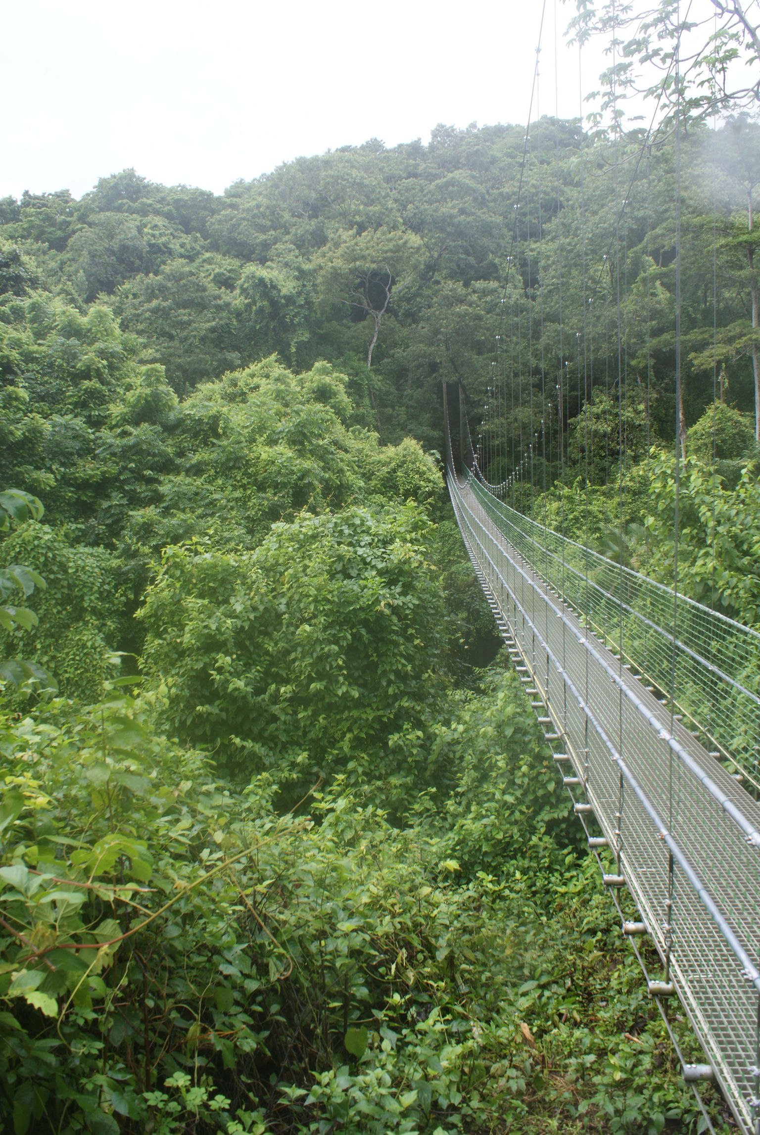 MÁS FOTOS, Roatan Shore Excursion: Hanging Bridges Eco Tour and Beach Break