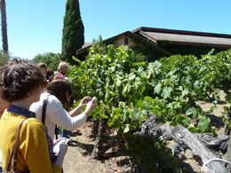Winery at Napa , Lars Peter F - August 2014