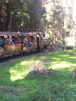 An enjoyable ride on Puffing Billy , BEVERLEY - October 2014