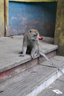 scimmietta, perplessa, mentre osserva dall'alto della scalinata la fatica sui volti dei turisti : , lorenzo b - June 2016