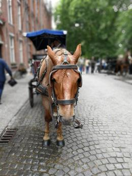 Horse drawn carriages can also be seen on the streets of Brugge. , WaiYee L - July 2017