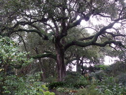 My husband and I were awed by the huge and beautiful trees on the grounds here. , Susan L - November 2015