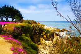 Gorgeous coastline with flowers, trees, rocks and a beautiful turquoise sea - 17 mile drive, Monterey, California - April 2011