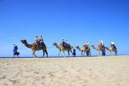 camel express along the Pacific , STEFANIE S - January 2016