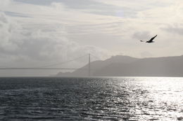 The view of the Golden Gate Bridge from the Sausalito side. , Eduardo L - May 2011