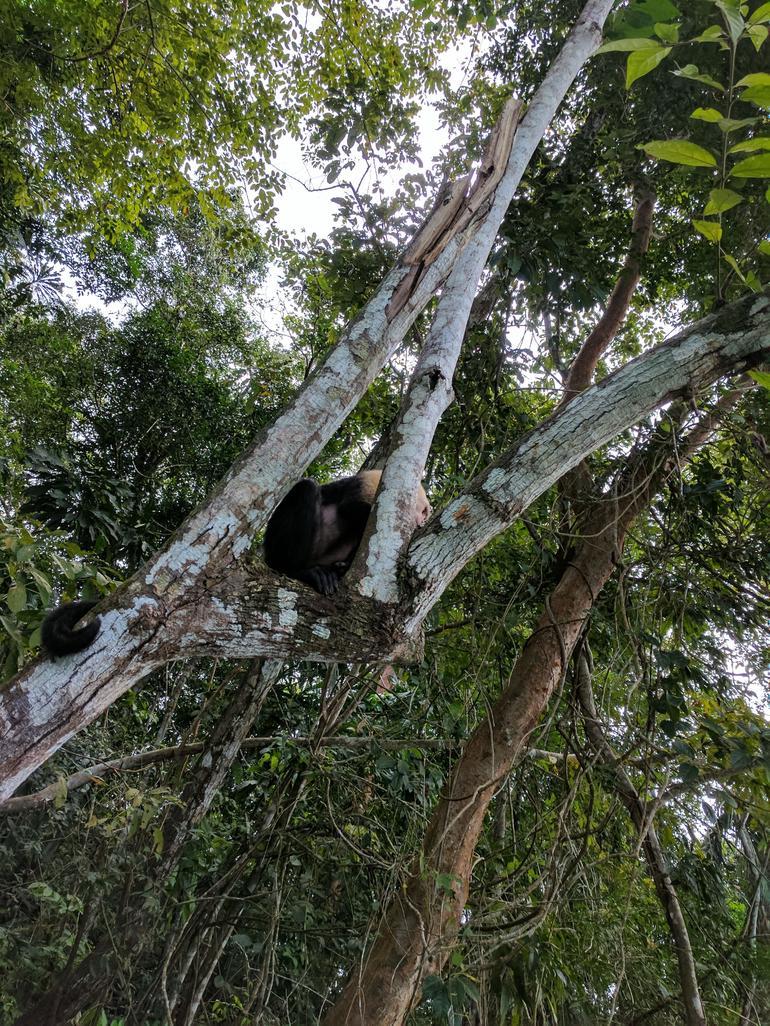 Panama Canal and Gatun Lake Jungle Eco Cruise