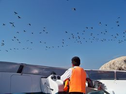 A flock of sea birds flying past our boat at Ballesta Islands -luckily no guano on our heads!, Tim Leffel - August 2011