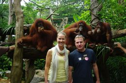 Newlyweds at Orangutan breakfast, Singapore Zoo- hope this isn't our new family - May 2011