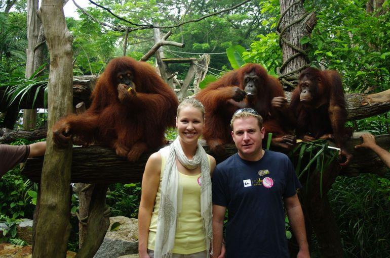 Newlyweds at Orangutan Breakfast, Singapore Zoo - Singapore