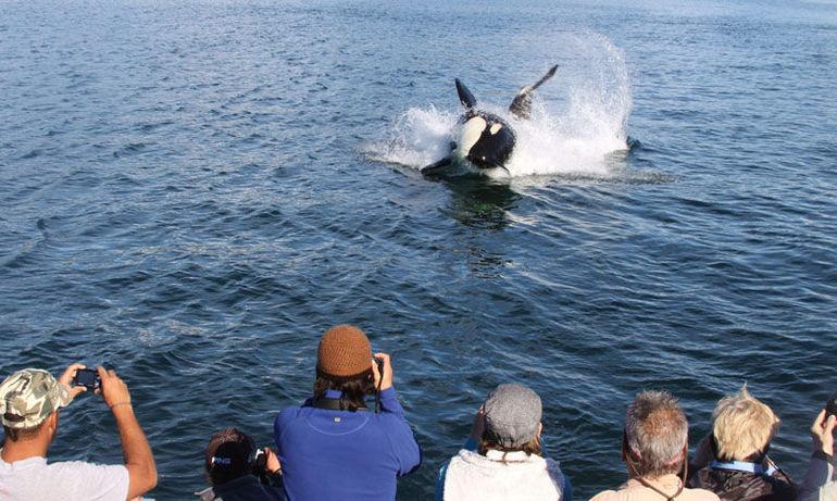 orca.jpg - Juneau