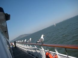 Seagulls hanging out on the boat. - April 2008