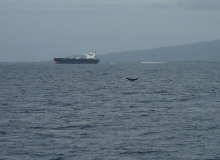 Whale Tail - Oahu