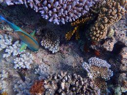Image from intro dive , Teresa C - November 2015