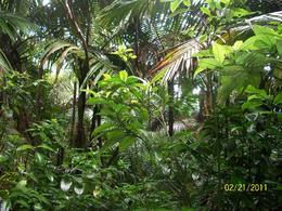 Rain Forest , Victoria B - February 2011