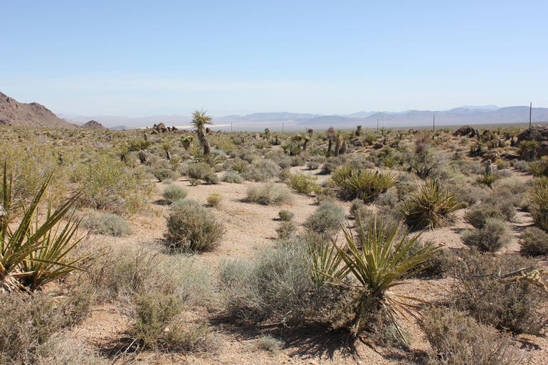 Hidden Valley and Primm Extreme ATV Tour photo 37