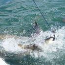Excursión en catamarán para ver tiburones y fauna y flora en Cayo Hueso, Cayo Hueso, FL, ESTADOS UNIDOS