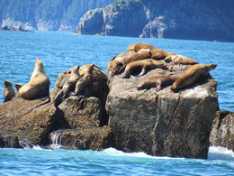 Some sea lions that lazed around on a rock were among the terrific sights we saw on the cruise , Alan S - July 2016