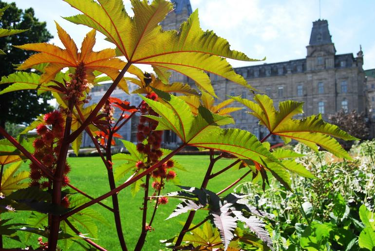 Flowers at Parliament - Quebec City