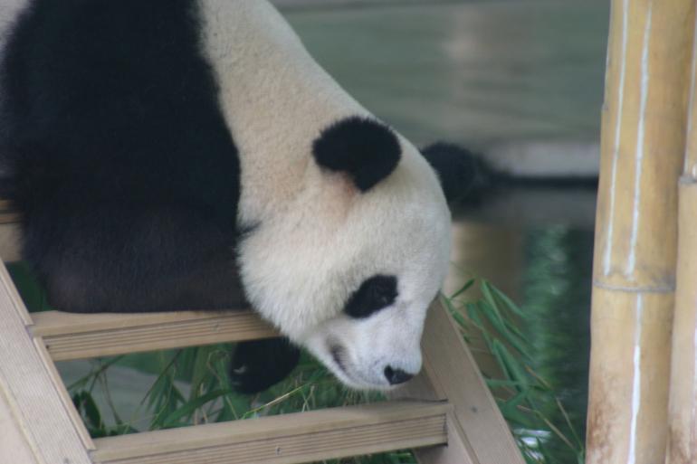 Guangzhou Zoo - Hong Kong