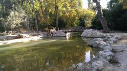 Lake in the national Garden , athens - October 2013