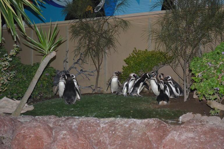 SeaWorld San Diego - San Diego