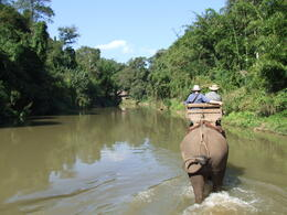 Elephant trek in river , Del - January 2011
