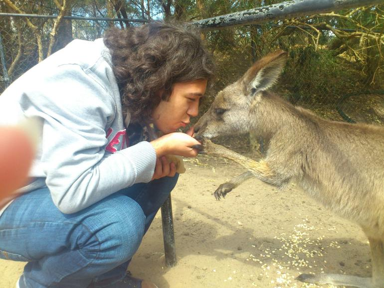 feeding wallabies - Sydney