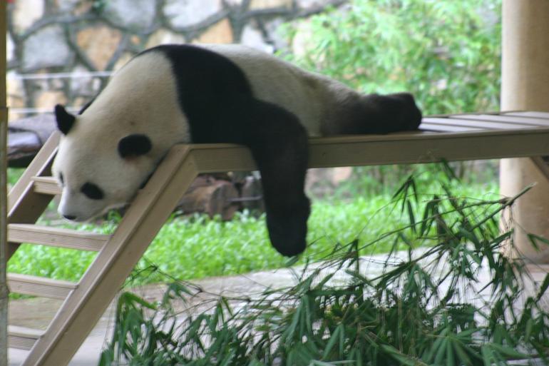 Guangzhou Panda - Hong Kong