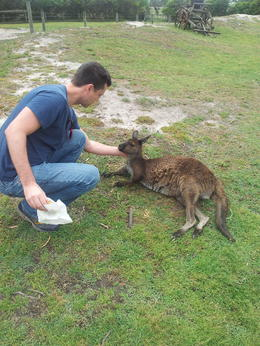 Feeding the kangaroos. , Michelle S - January 2014