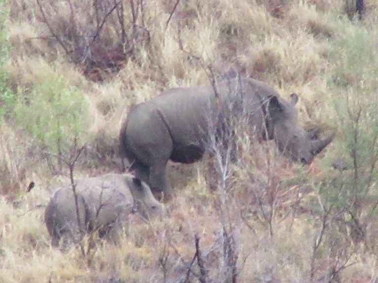 Pilanesberg National Park One Day Safari from Johannesburg photo 13